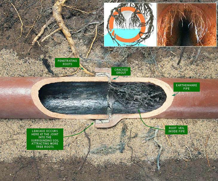 schéma canalisation bouchée par des racines